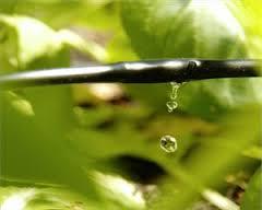 بررسی آبیاری قطره ای ثقلی بدون پمپ